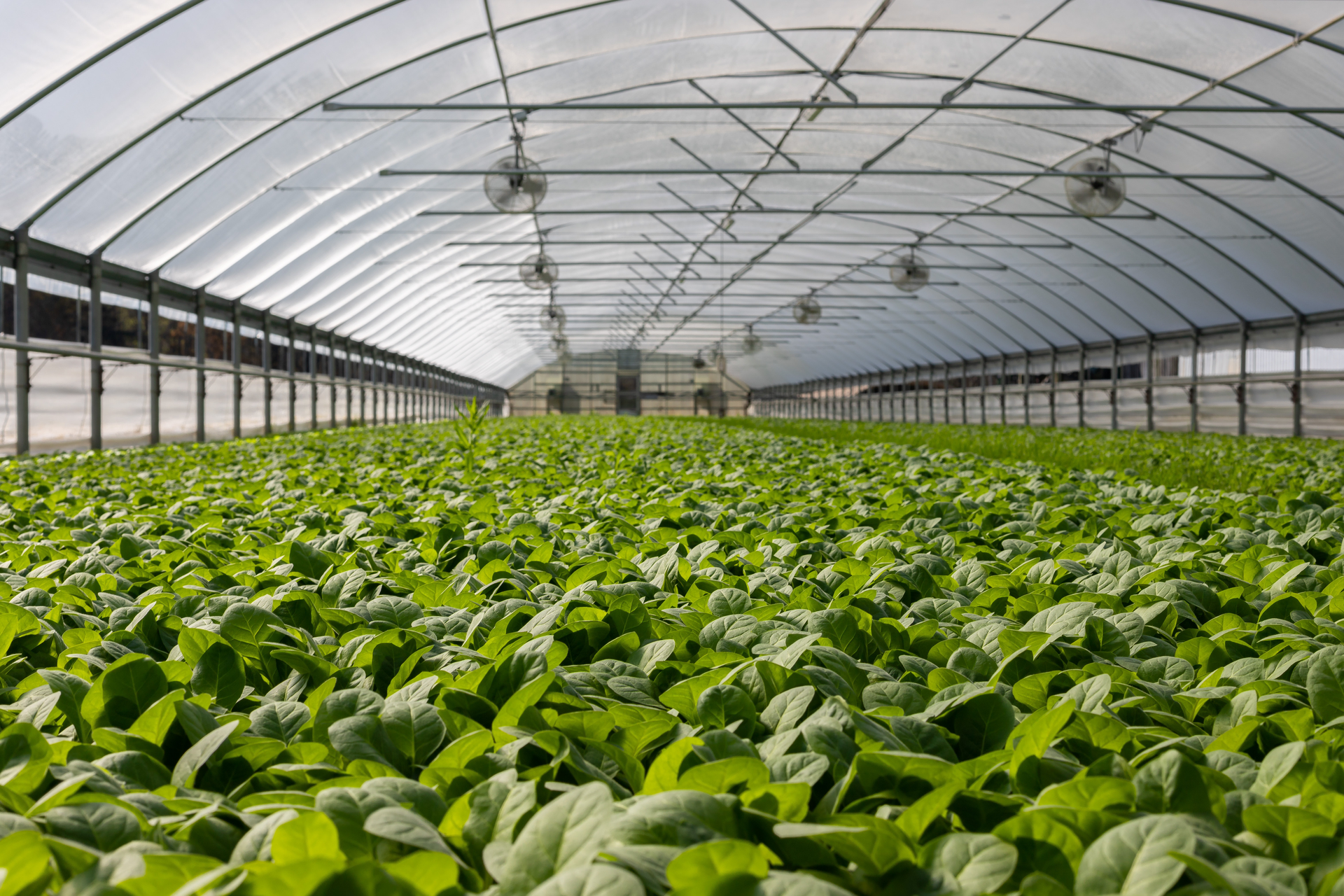 Gotham Greens Opening First Greenhouse in Denver